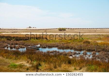 Boat in the marshes of Douro river, Portugal Stock photo © dinozzaver