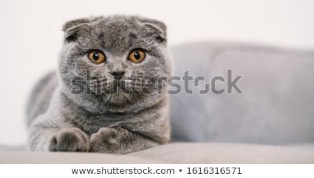 肖像 · 猫 · 緑 · ソファ · 自然 · 髪 - ストックフォト © silense