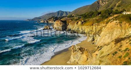 côte · Californie · rose · fleurs · nord - photo stock © pictureguy