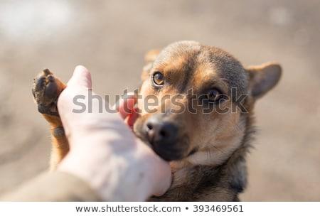 Kurtarmak köpek kış kar yardım genç Stok fotoğraf © adrenalina