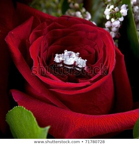 çiçekler · kırmızı · gül · beyaz · yeşil · duvar · kağıdı - stok fotoğraf © juniart