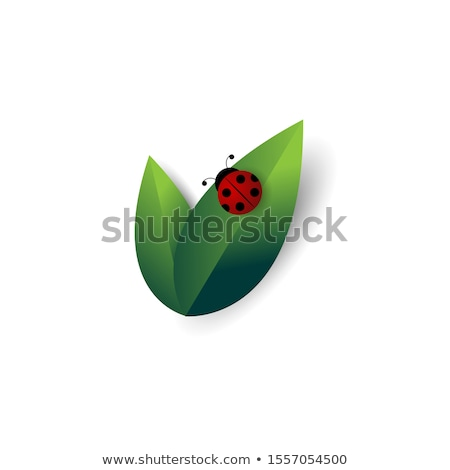 Katicabogár levél közelkép piros katicabogár zöld levél Stock fotó © TaiChesco