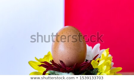 two brown eggs in patterned eggcups stock photo © frannyanne