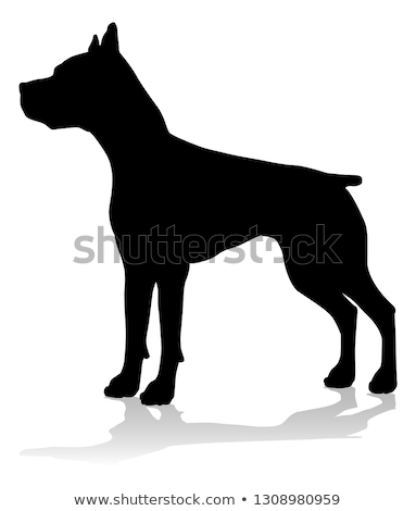 Detail of Staffordshire Bull Terrier puppy Stock photo © CaptureLight