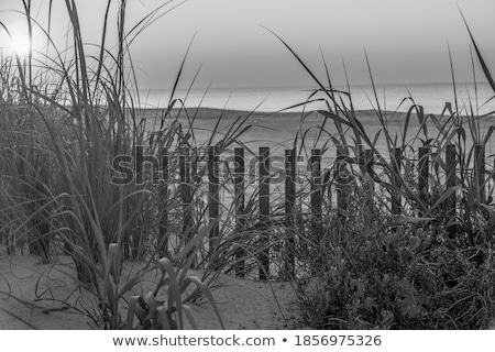 fence for protection of the dunes at the beautiful natural beach Stock photo © meinzahn