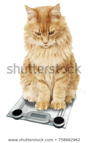 Stock photo: Little cat on weight scale