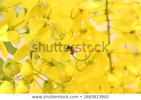ストックフォト: マクロ · 蜂 · 黄色の花 · 黄色 · 桜 · 昆虫