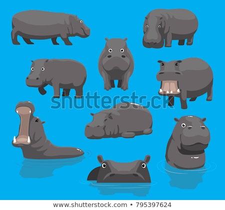 Hippo yawning Stock photo © Vividrange