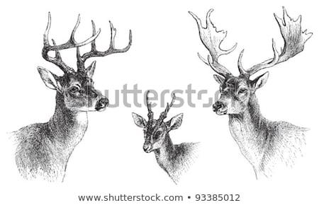 Photo stock: Noir · cerfs · milieu · forêt · regarder