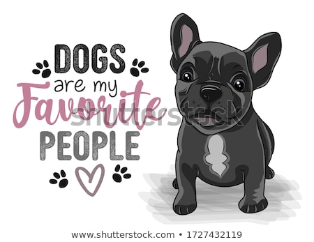 Stock photo: dog french bulldog