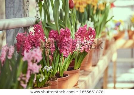 flor · suelo · agua · madera · trabajo - foto stock © latent