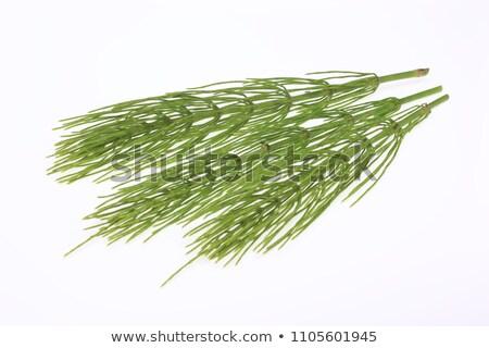 Heilung Anlage Hintergrund Sommer Bereich grünen Stock foto © joannawnuk