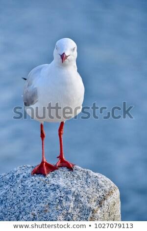 カモメ 立って 岩 島 ぼやけた 青 ストックフォト © bbbar