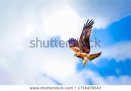 Foto stock: Falcão · voador · céu · coração · azul · voar