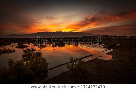 Sunset ain the Trees stock photo © Backyard-Photography