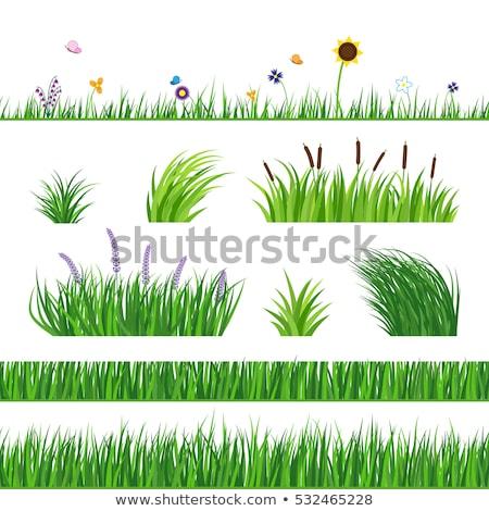ayçiçeği · parlak · stil · yaprakları · bahçe · arka · plan - stok fotoğraf © bluering