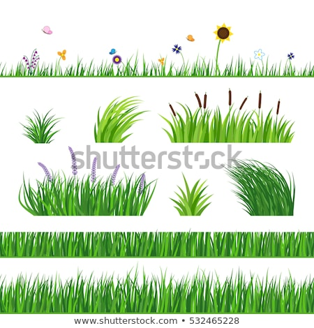 Foto stock: Sem · costura · girassóis · grama · ilustração · natureza · fundo