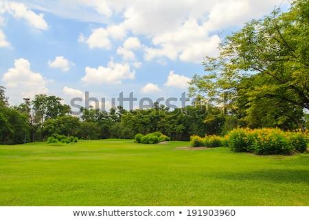 Park vidék sáv kert rajz fák Stock fotó © Krisdog