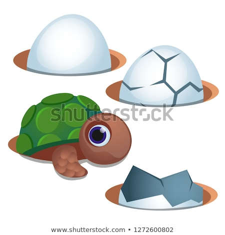 Pretty blue-eyed little turtle and cracked egg shell isolated on white background. Vector cartoon cl Stock photo © Lady-Luck