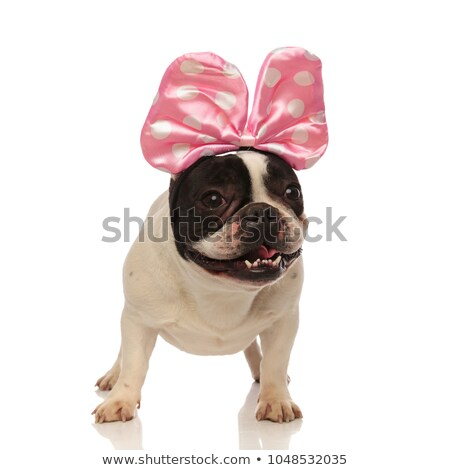 french bulldog wearing pink ribbon on head looks to side Stock photo © feedough
