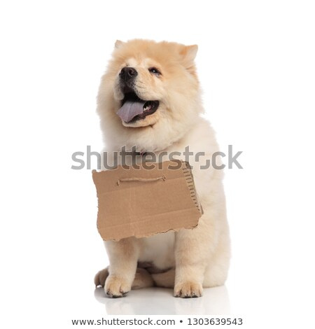 cute chow chow with empty billboard looks up to side Stock photo © feedough