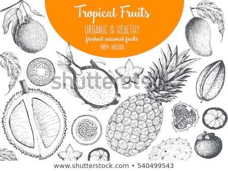 Mango ananas posters ingesteld vector mangisboom Stockfoto © robuart