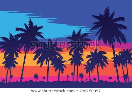 été tropicales coucher du soleil palmiers ciel arbre Photo stock © SArts
