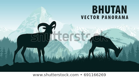 Horns Animal, Goat in Forest, Wildlife Vector Stock photo © robuart