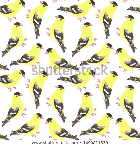 American goldfinch or Spinus tristis bird seamless watercolor birds painting background Stock photo © shawlinmohd