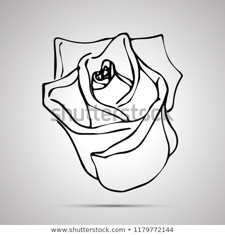 Aranyos skicc rózsabimbó egyszerű fekete ikon Stock fotó © evgeny89