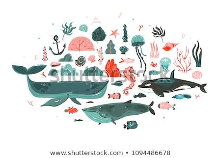 Ingesteld zeemeermin koraal witte illustratie natuur Stockfoto © bluering