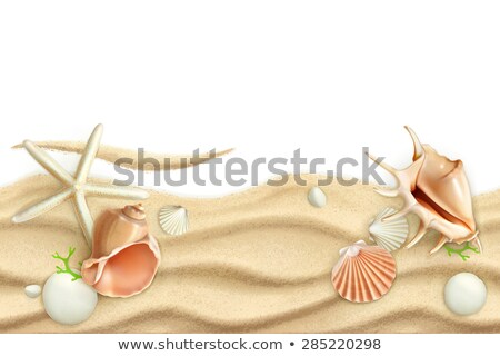 sand and seashells border vector illustration stock photo © carodi