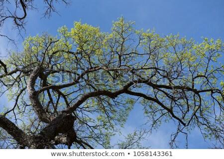 ストックフォト: 小さな · 春 · 葉 · 空 · 青空 · コピースペース