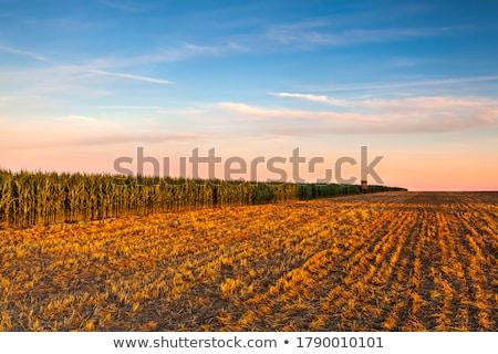 cevada · campo · colheita · tempo · trator - foto stock © sarahdoow