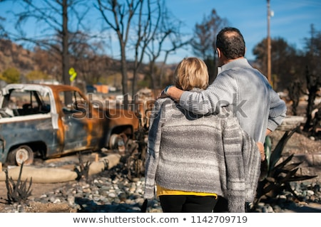 forest after fire disaster burned trees stock photo © lunamarina