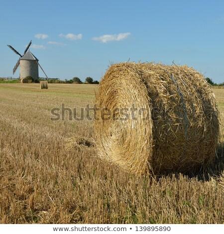 vidéki · díszlet · szélturbina · napos · vidéki · táj · déli - stock fotó © escander81