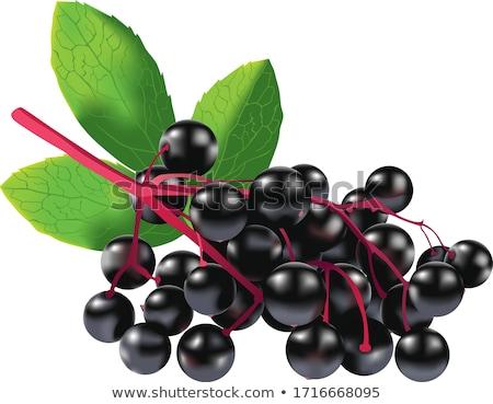 Stock photo: Elder Berries