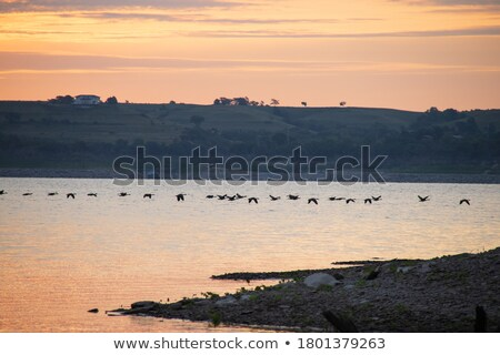 гусей Flying океана большой группа воды Сток-фото © Hofmeester