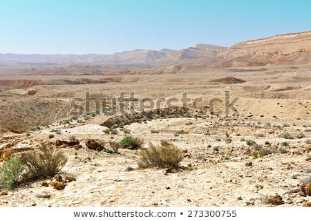 negev desert landscape stock photo © oleksandro