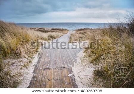 Balti-tenger tél tenger fű égbolt háttér Stock fotó © Arrxxx