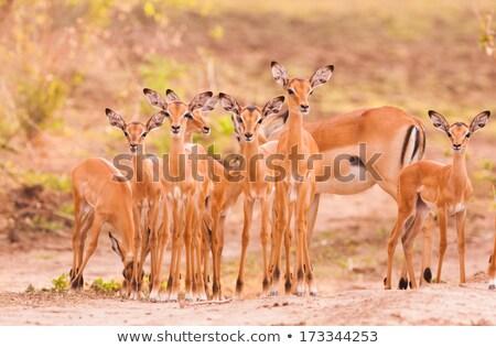 baby · naar · voedsel · woestijn · Botswana · moeder - stockfoto © romitasromala