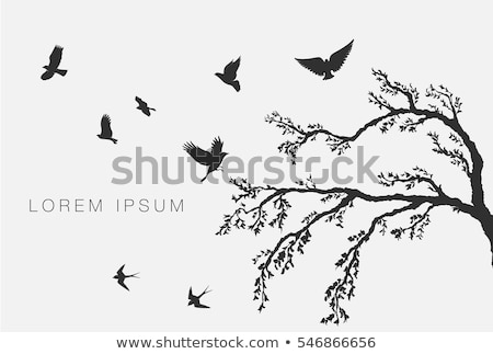 tree branches flying birds stock photo © sirylok