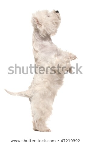 Cute dog standing alone and looking up Stock photo © wavebreak_media