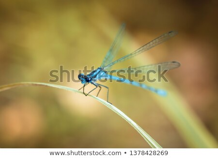Blue Coenagrionidae on leaf in forest Stock photo © mady70