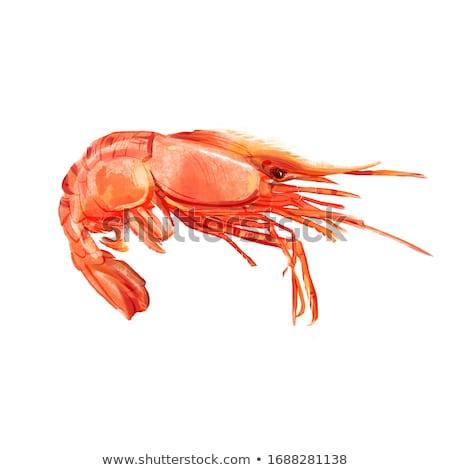 креветок изолированный иллюстрация морепродуктов белый рыбы Сток-фото © ConceptCafe