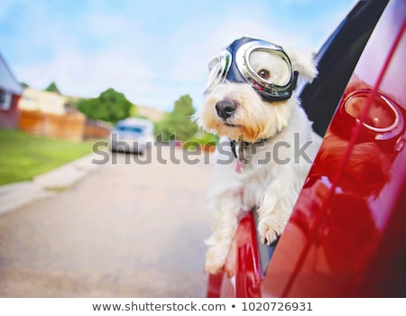 dog looking through car window stock photo © simply