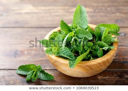 Vers mint houten bladeren plant gezonde Stockfoto © yelenayemchuk