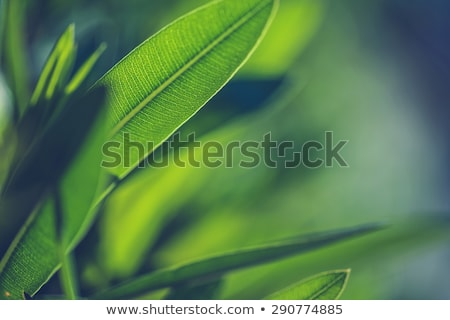 Green leaf veins macro close up. Stock photo © latent