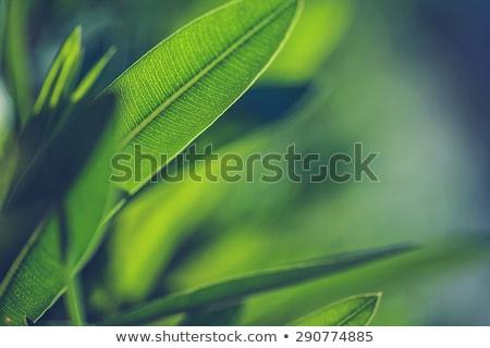 Groen blad aderen macro boom abstract Stockfoto © latent