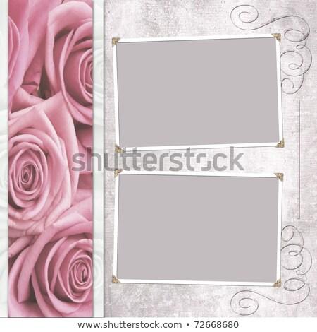 Gül bej mor çiçekler tebrik Stok fotoğraf © robuart
